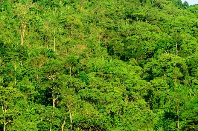 โครงการปลูกป่า